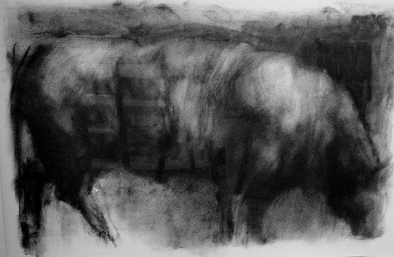 Elaine Green, Angus 2008, charcoal on paper