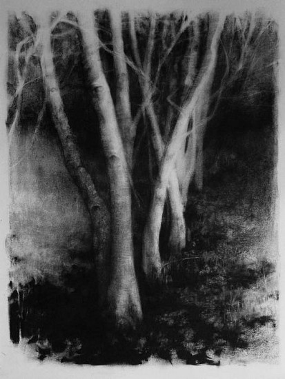 Elaine Green, Oregon Forest Black Leaves 2009, charcoal on paper